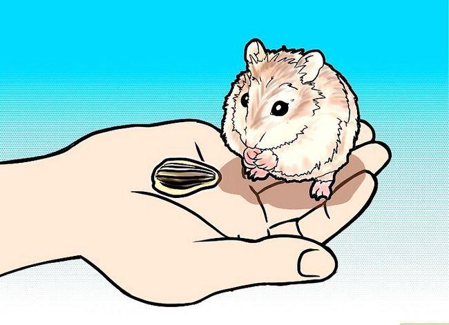 Titel afbeelding Tame a Roborovski Hamster Step 5