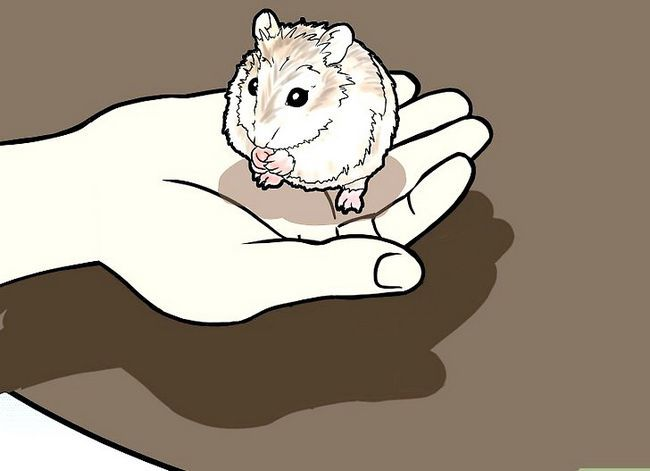 Titel afbeelding Tame a Roborovski Hamster Step 6