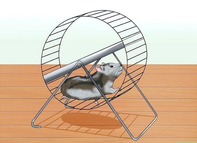 Titel afbeelding Exercise a Hamster Step 1