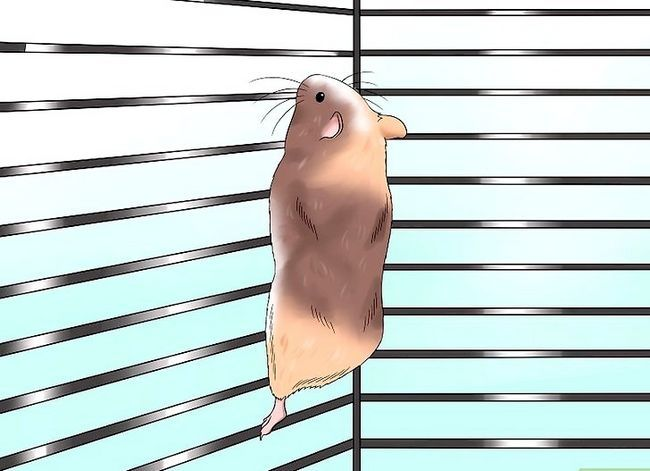Titel afbeelding Exercise a Hamster Step 3
