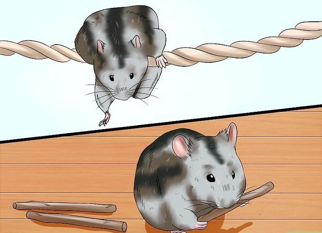 Titel afbeelding Exercise a Hamster Step 4