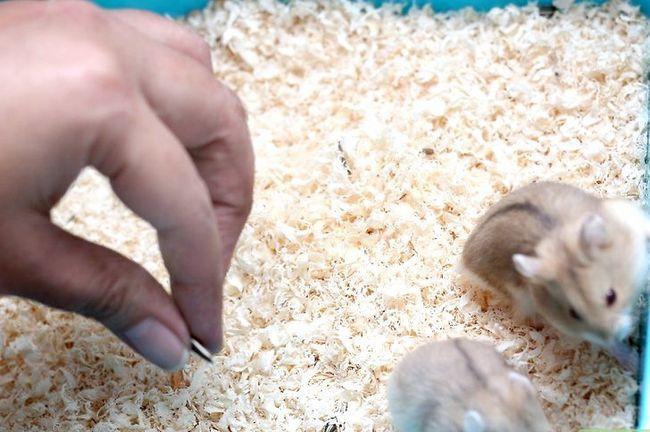 Titel afbeelding Make Hamster Keuzes voor eten, water en beddengoed Stap 6
