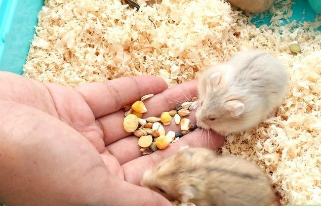 Titel afbeelding Make Hamster Keuzes voor eten, water en beddengoed Stap 7