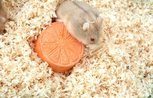 Titel afbeelding Make Hamster Keuzes voor eten, water en beddengoed Stap 10