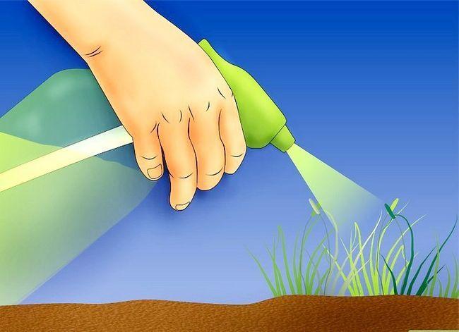Titel afbeelding Kill Weeds Step 5