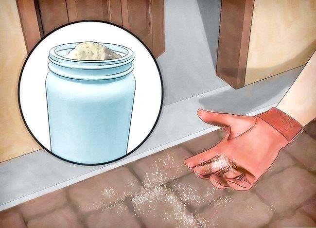 Hoe u stink bugs op natuurlijke wijze kunt elimineren