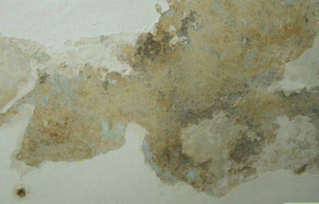 Titel afbeelding Clean Dust Mites Step 1