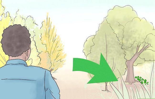 Titel afbeelding Find a Four Leaf Clover Step 3