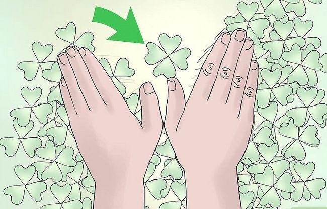 Titel afbeelding Find a Four Leaf Clover Step 7