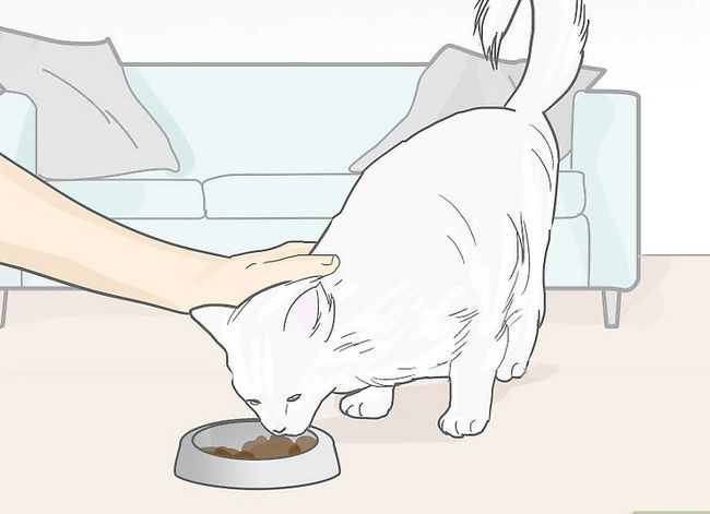 Titel afbeelding Cope with the Death of Your Cat Step 13