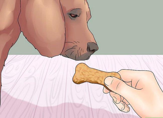 Hoe je je hond leert het been te geven
