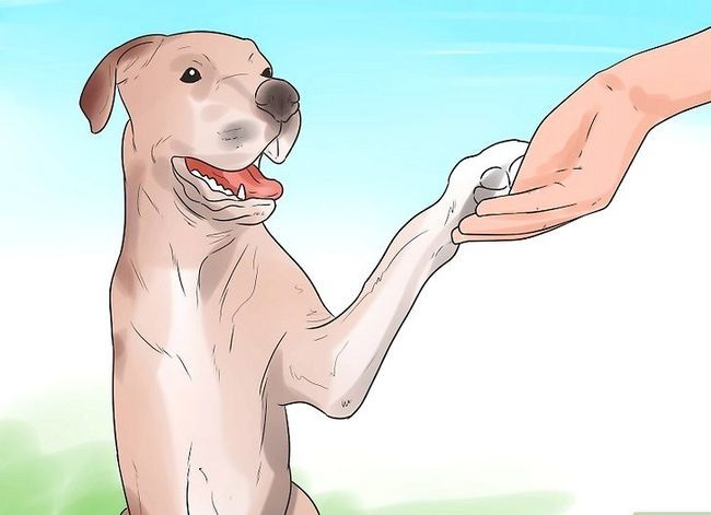 Titel afbeelding Teach Your Dog to Shake Hands Stap 11