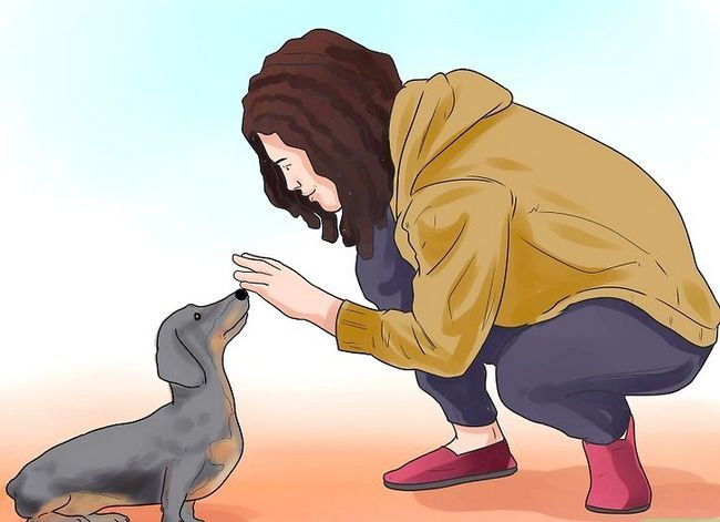Titel afbeelding Teach Your Dog to Shake Hands Stap 2