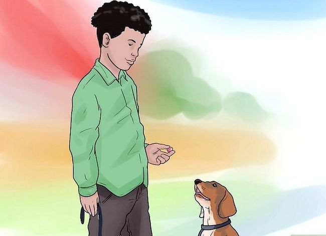 Titel afbeelding Teach Your Dog to Shake Hands Stap 3