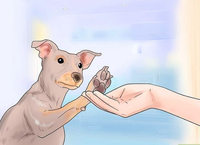 Titel afbeelding Teach Your Dog to Shake Hands Stap 4