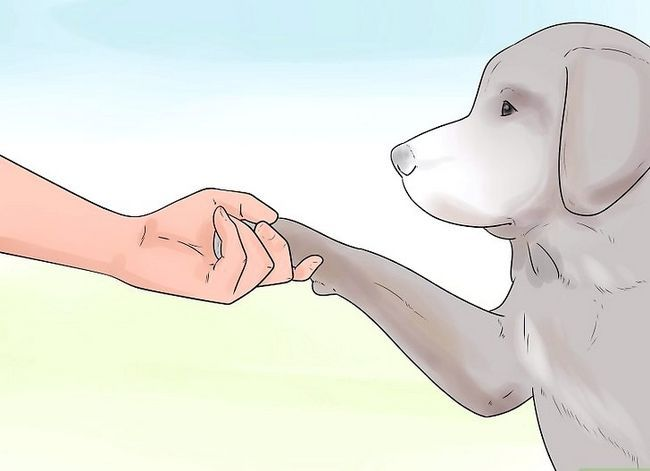 Titel afbeelding Teach Your Dog to Shake Hands Stap 5