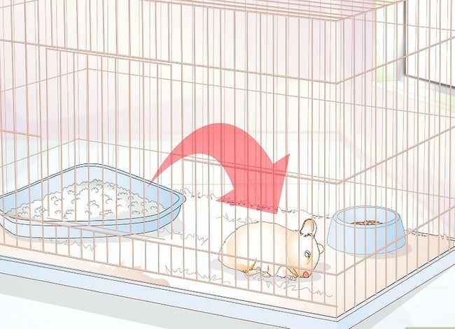 Titel afbeelding Potty Train a Hamster Step 11