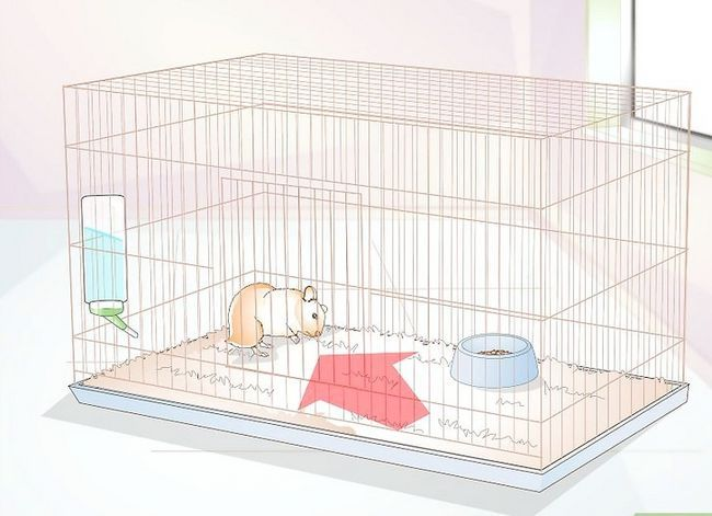 Titel afbeelding Potty Train a Hamster Step 8