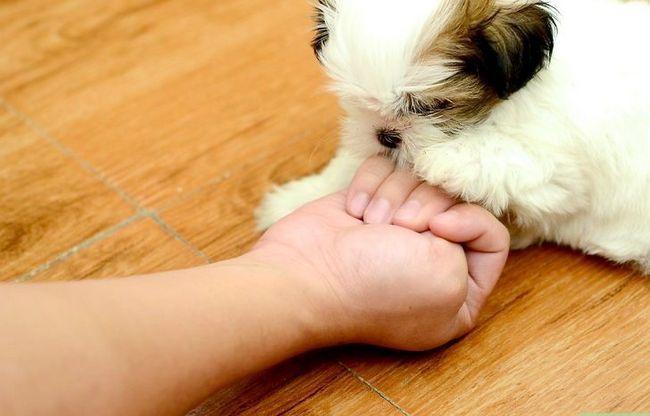 Titel afbeelding Teach a Dog to Grab Paw Step 4