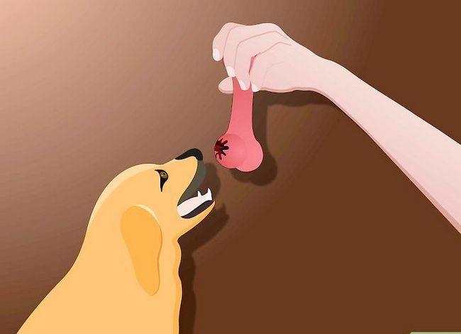 Titel afbeelding Teach a Dog to Stap 2 ophalen