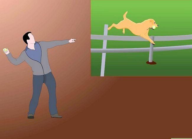 Titel afbeelding Teach a Dog to Stap 4 ophalen