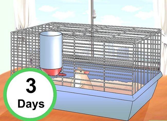 Titel afbeelding Train Your Hamster Step 1