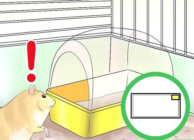Titel afbeelding Train Your Hamster Step 12