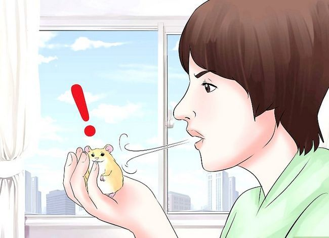 Titel afbeelding Train Your Hamster Step 15