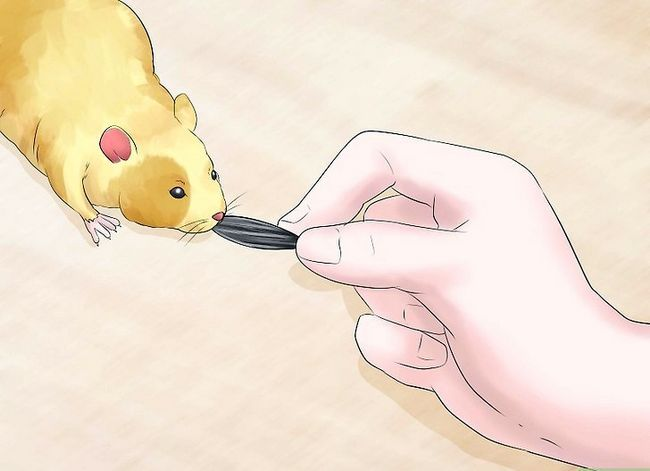 Titel afbeelding Train Your Hamster Step 4