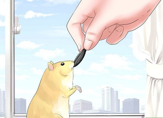 Titel afbeelding Train Your Hamster Step 6