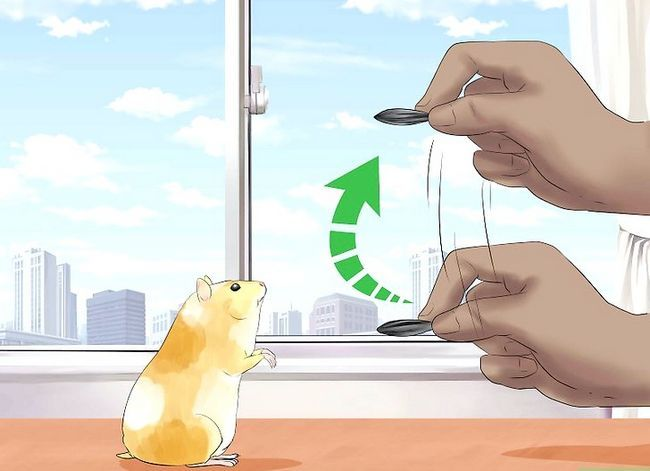 Titel afbeelding Train Your Hamster Step 8