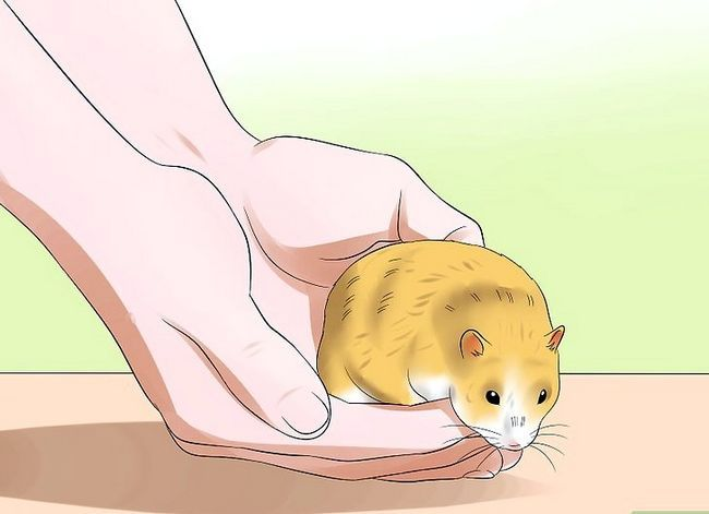 Titel afbeelding Train to Hamster Not to Bite Step 12