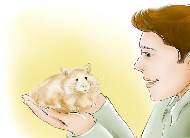 Titel afbeelding Train Your Hamster to Come When You Call Stap 1