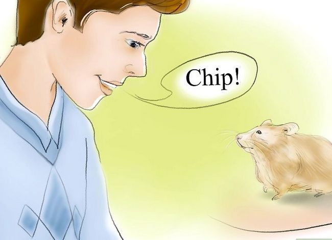 Titel afbeelding Train Your Hamster to Come When You Call Stap 12
