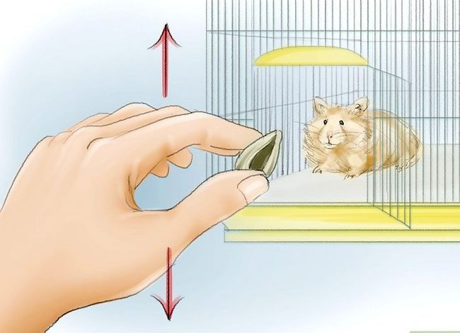 Titel afbeelding Train Your Hamster to Come When You Call Stap 3