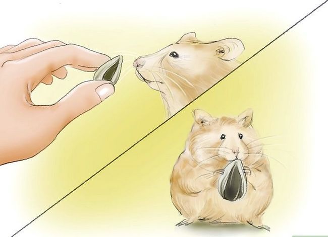 Titel afbeelding Train Your Hamster to Come When You Call Stap 4