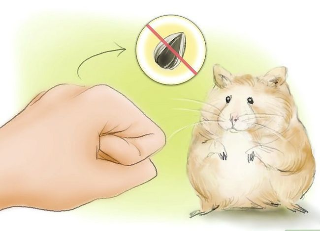Titel afbeelding Train Your Hamster to Come When You Call Stap 6