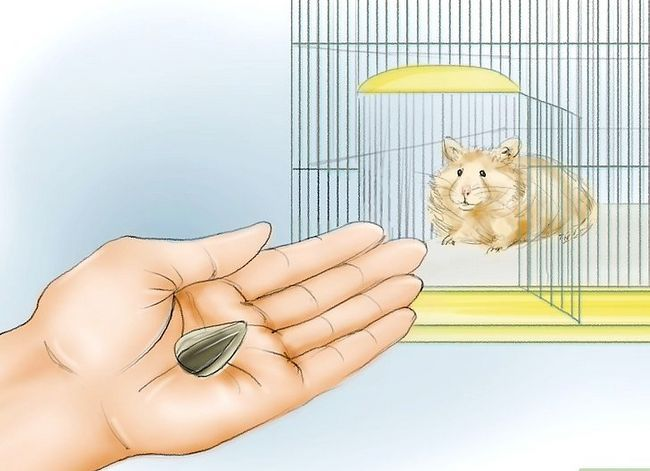 Titel afbeelding Train Your Hamster to Come When You Call Stap 9