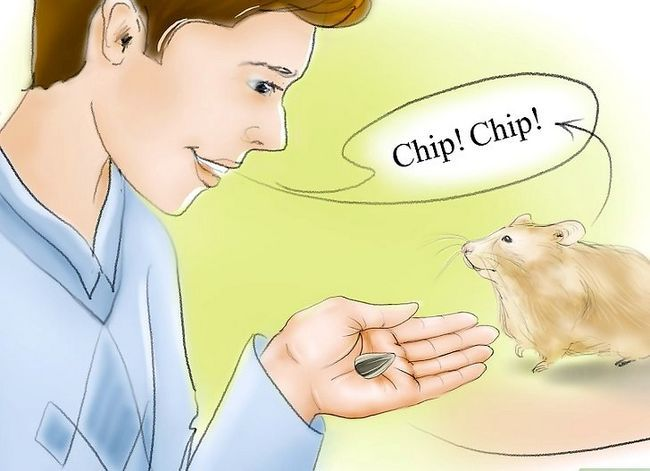 Titel afbeelding Train Your Hamster to Come When You Call Stap 10