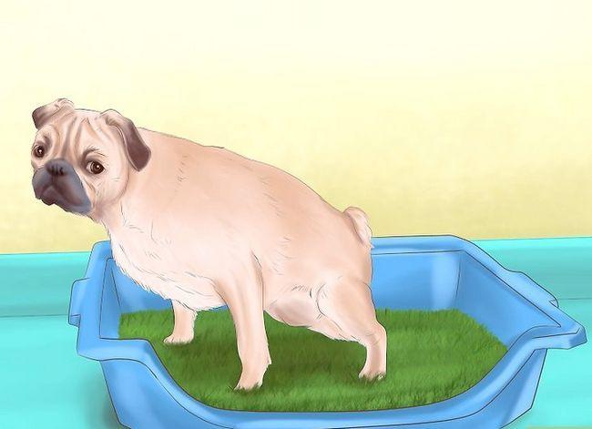 Titel afbeelding House Train an Older Dog Step 6