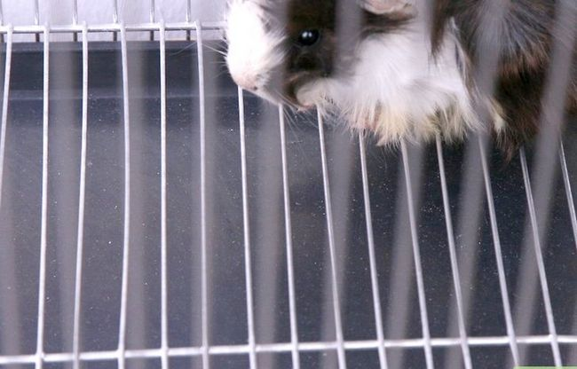 Titel afbeelding Choose Good Cages for Hamsters Step 2