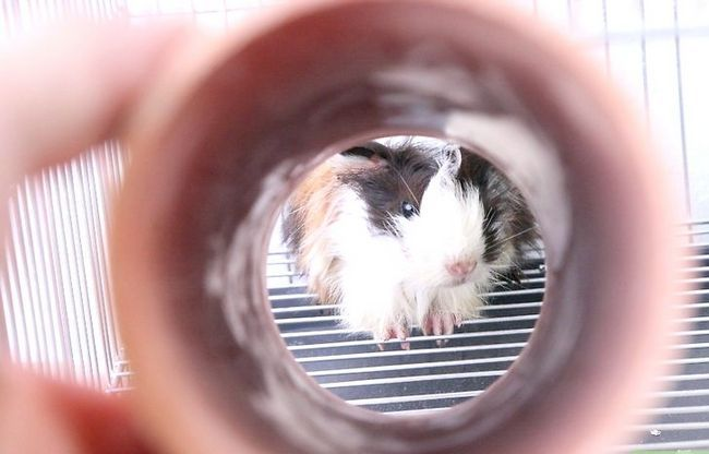 Titel afbeelding Choose Good Cages for Hamsters Step 5
