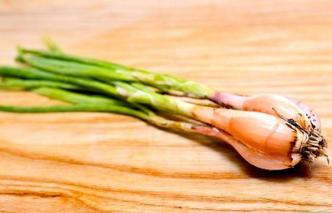 Titel afbeelding Tell the Difference Between lente-uitjes, sjalotten en groene uien Stap 3