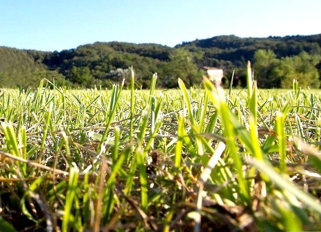 Hoe te voorkomen dat landschapskruiden zich verspreiden