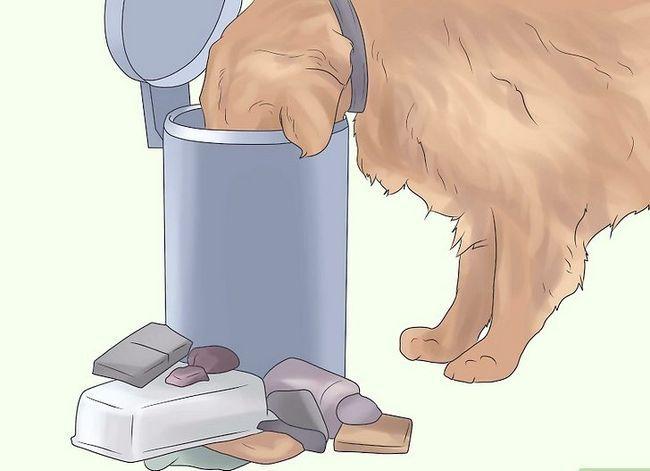 Titel afbeelding Prevent UTI in Dogs Step 11