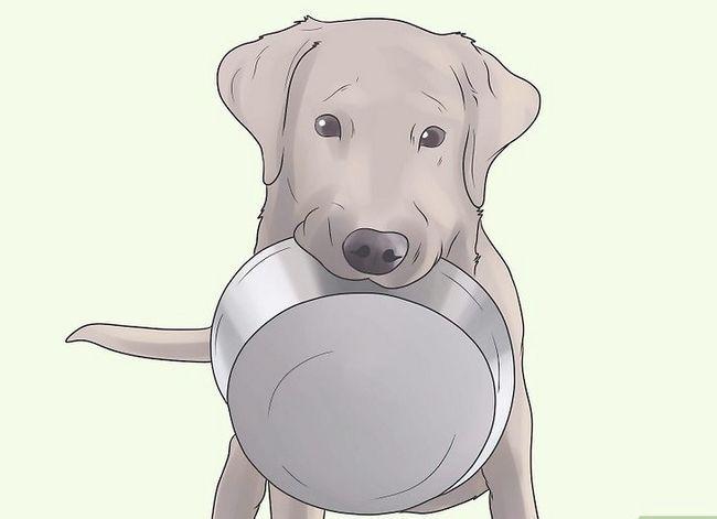 Titel afbeelding Prevent UTI in Dogs Step 3