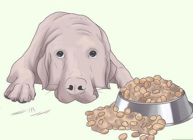 Titel afbeelding Prevent UTI in Dogs Step 9