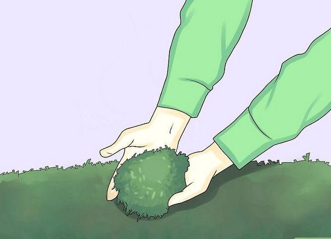 Titel afbeelding Fertilize a Garden Cheaply Step 5