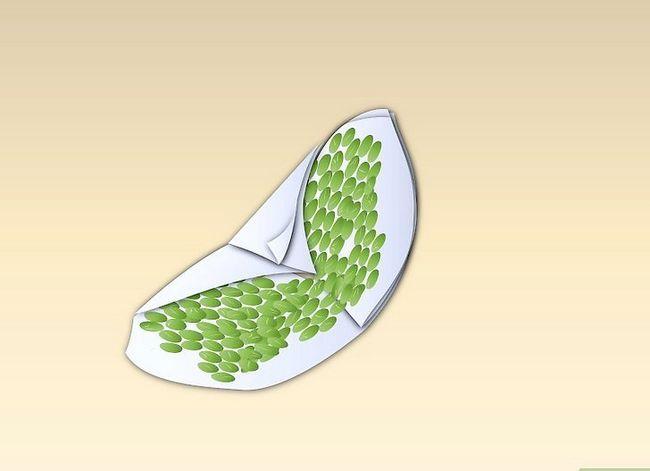 Titel afbeelding Germinate Peas Step 3