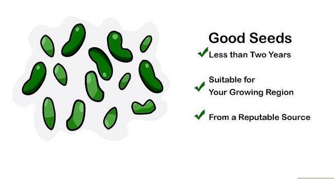 Titel afbeelding Germinate Seeds Step 1